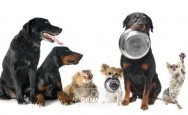 Futterberater/in für Haustiere